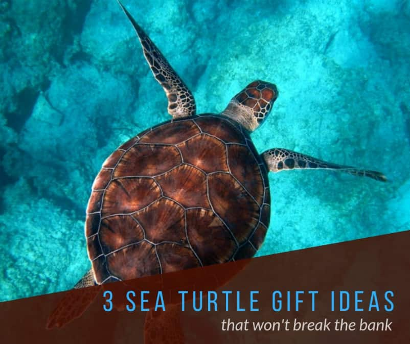 sea turtle gifts ideas